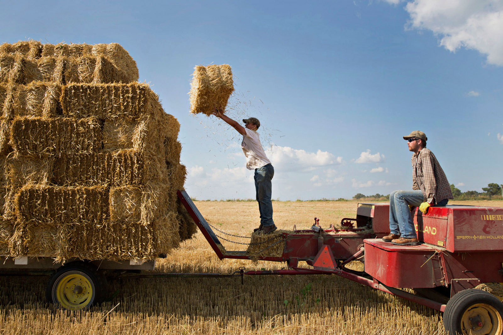 Farmhands stack bales of straw in a field where soft red winter wheat had been harvested in Kirkland, Ill.