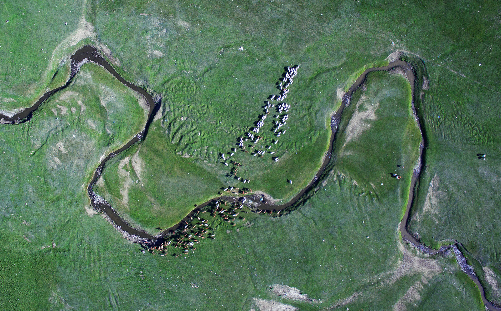 Sheep and goats graze near a stream in this aerial photograph taken in Tuv province, Mongolia