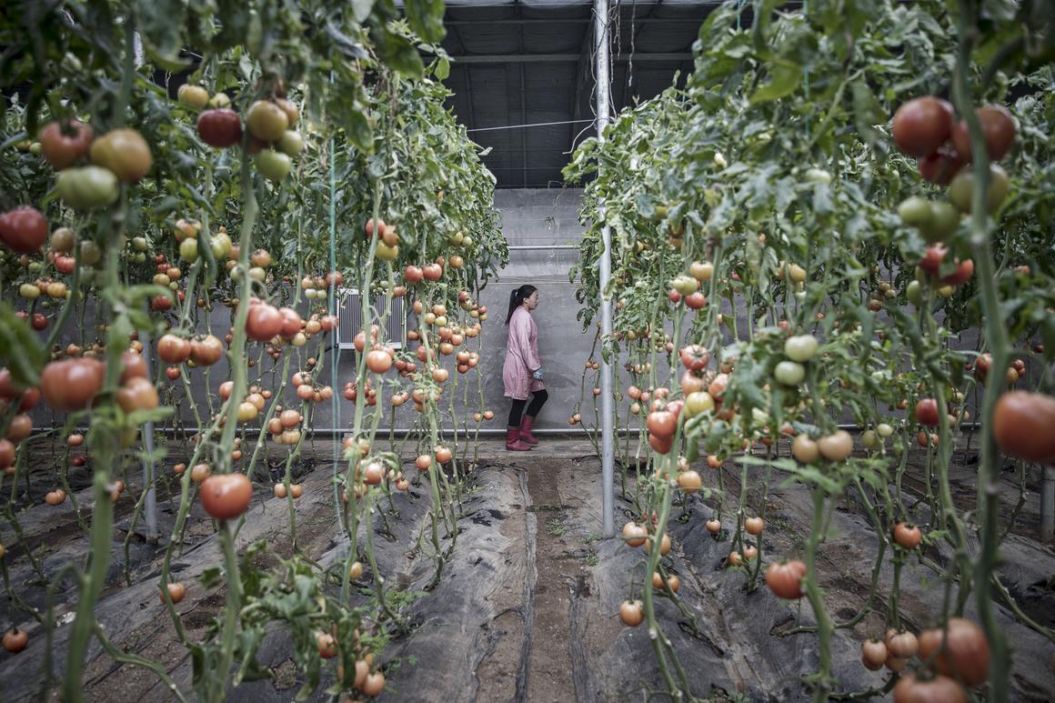 Глобальные сельское хозяйство: гонка Китая по предотвращению продовольственного кризиса
