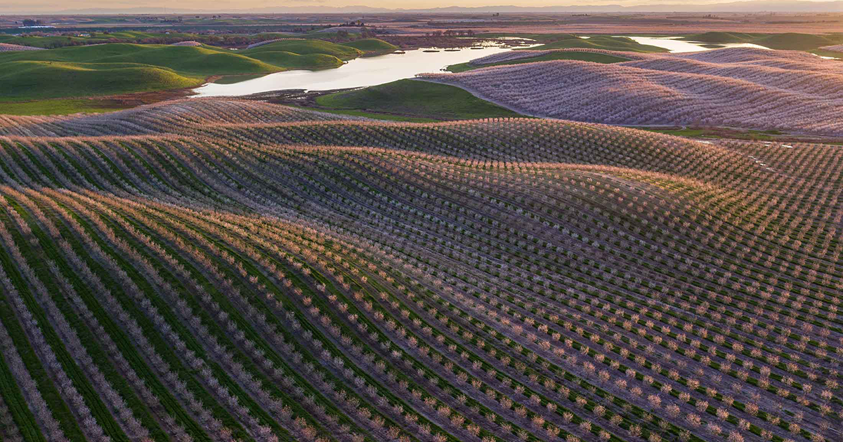 California Almonds Are Back After Four Years of Brutal Drought1200 x 630 png 1503kB