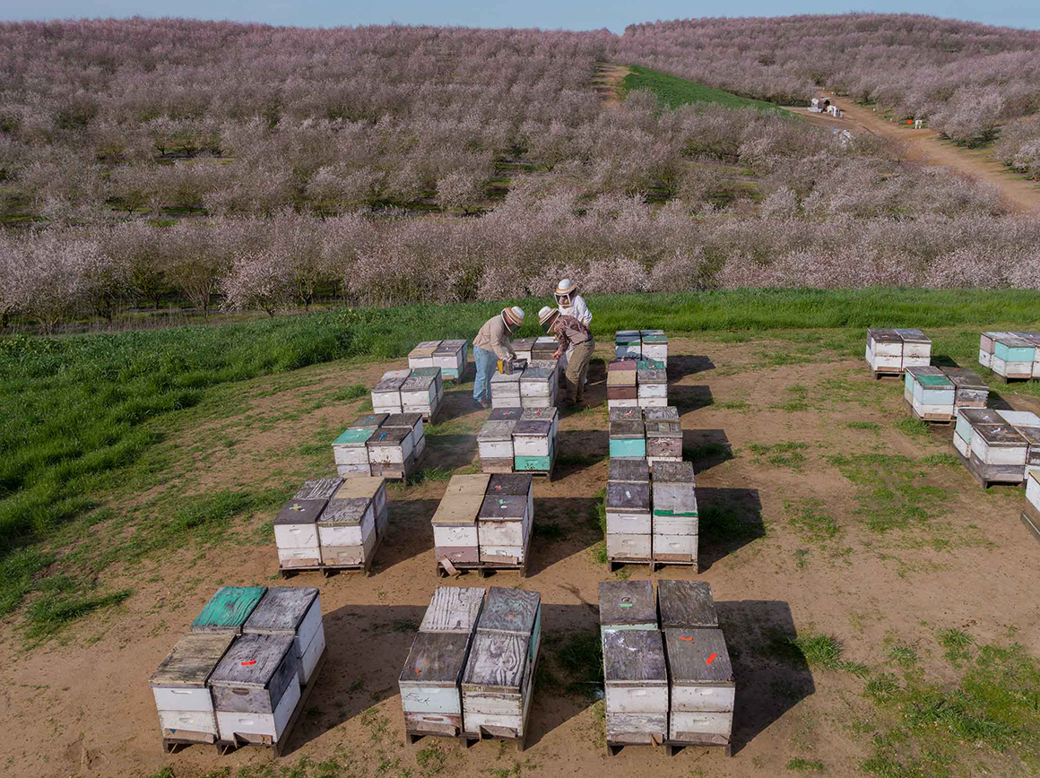California Almonds Are Back After Four Years of Brutal Drought