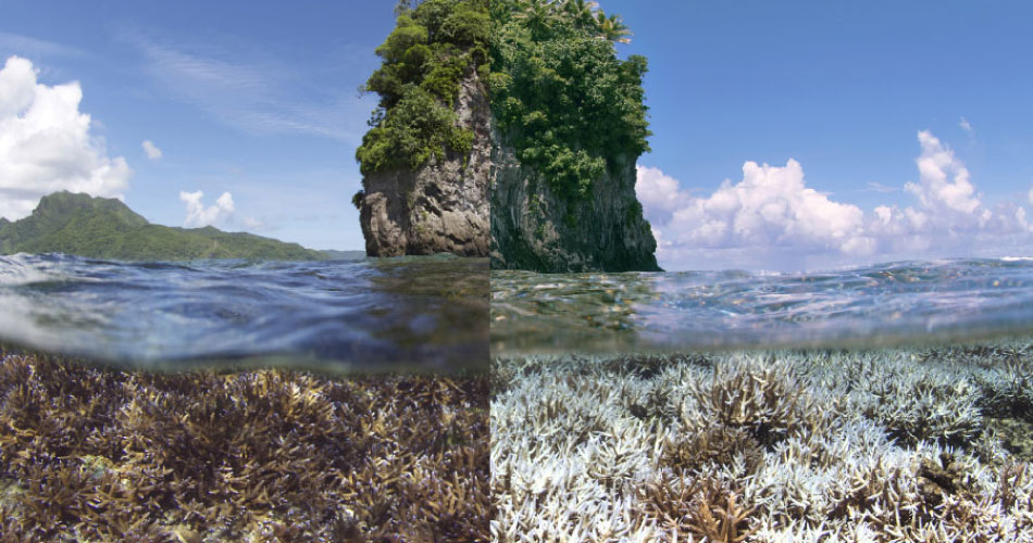 Can Coral Reefs Survive Climate Change Oceans Are At Risk