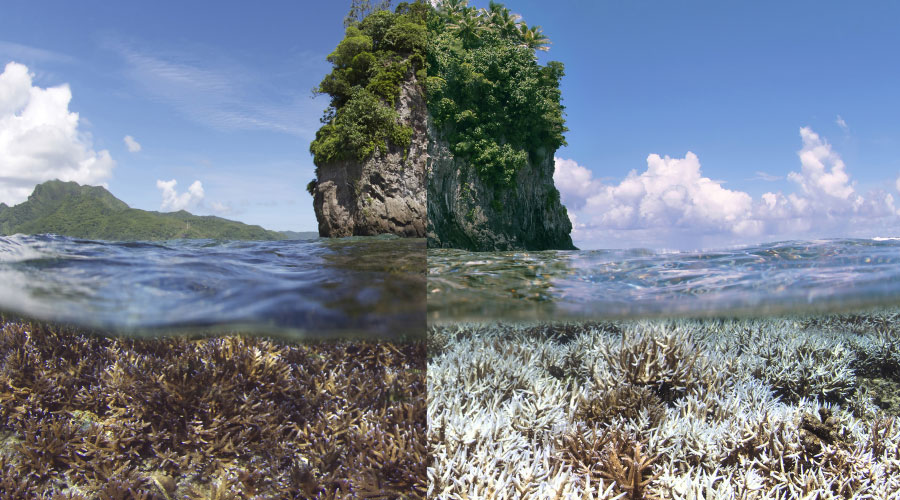 What the World Loses When Warming Kills Off Coral Reefs